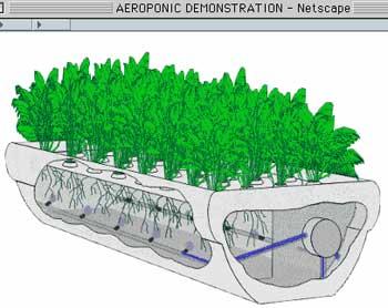aeroponics.jpg