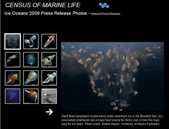 Cebsys_of_marine_life