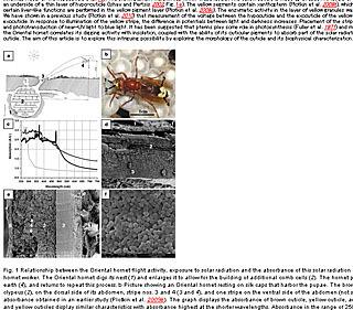 Naturwissenschaften_volume_97_numbe